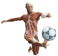 Body Worlds: Soccer Player